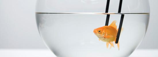 Rå fisk til sushi - guide til rå fisk